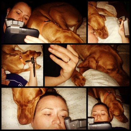 Independence Day Snuggles with Rowdy Vizsla
