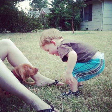 Boy Meets Vizsla Puppy